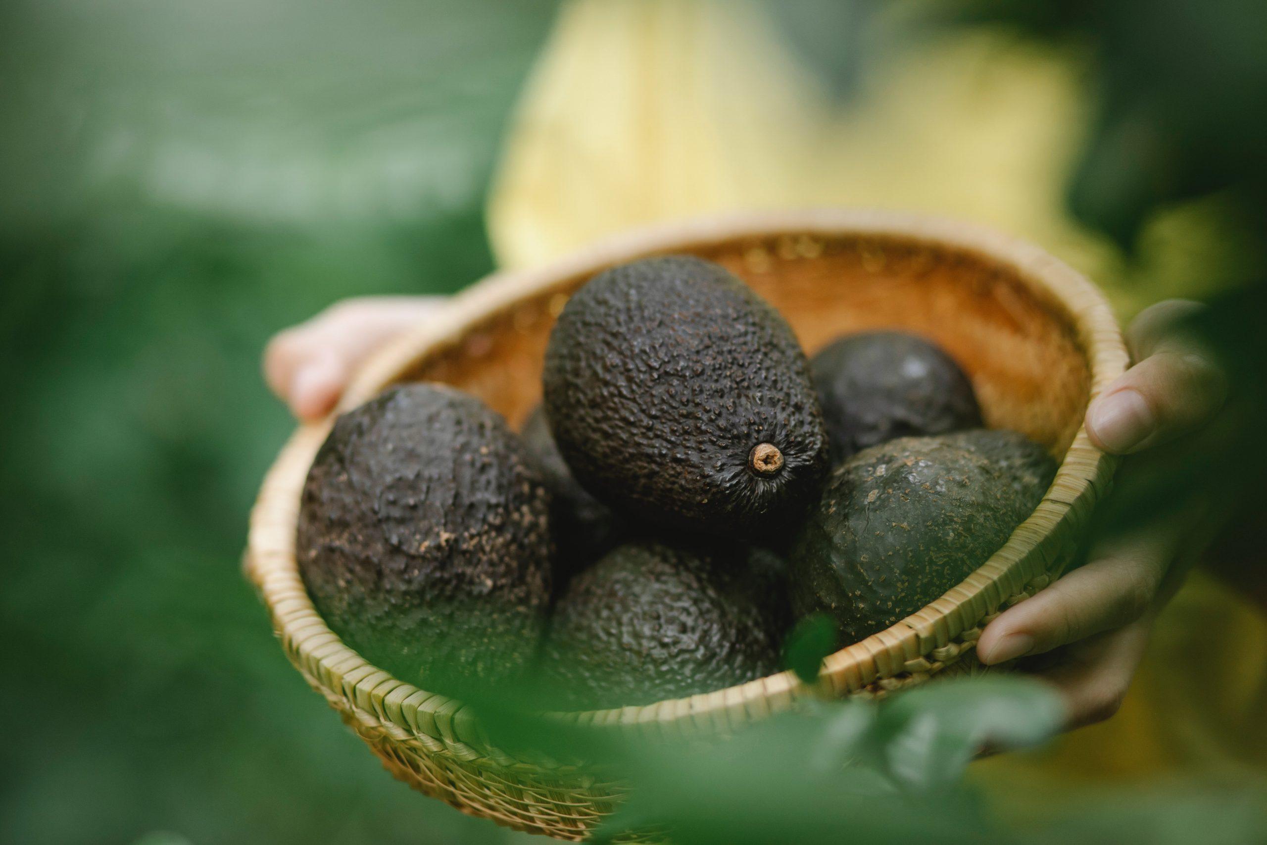 Avocados in a basket