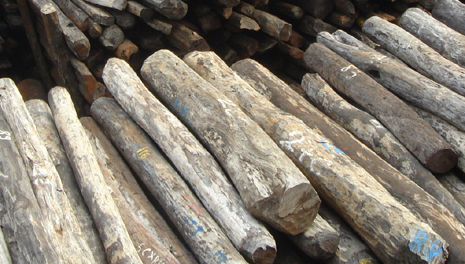 New Efforts to Save Forests by Curbing Trade in Illegal Wood