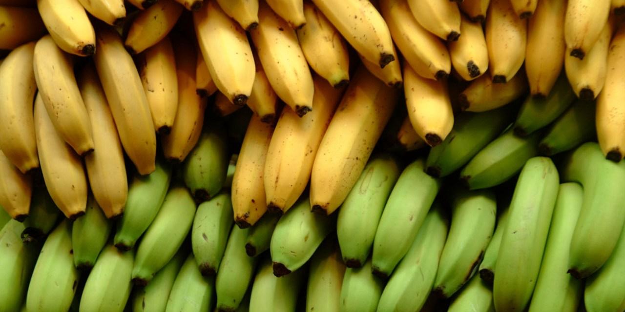 Banana Industry's Impact on Rainforests