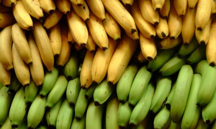 Banana Industry's Impact on Rainforests