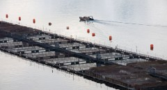A salmon farming operation in Chile