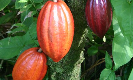Cocoa Sustainability Initiative Garners State Dept. Award