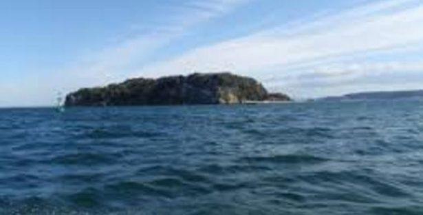 東京湾のボートシーバス釣行記、コノシロパターンに挑戦!