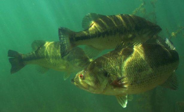 【バス釣りの季節(時期)戦略】【春・夏・秋・冬】ルアー・釣り方、パターン、居る場所(居場所)、人気おすすめ【ランキング】