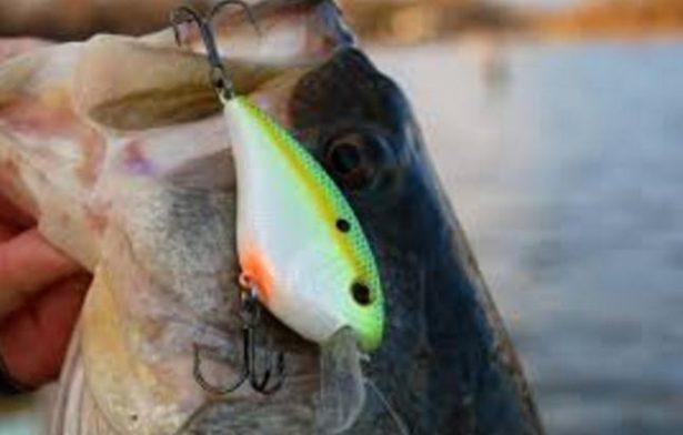 【バス釣り】【クランクベイト】で釣る方法、種類、タックル、人気おすすめ【ランキング】