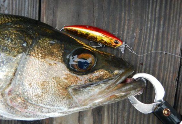 【シーバス釣り用のルアー】種類・使い方(アクション)・選び方【まとめ】人気おすすめ【ランキング】