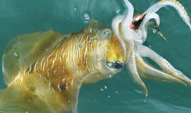 【エギング】【アオリイカを釣る方法】時期、ポイント、タックル、人気おすすめ【ランキング】
