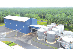 NBPOL's joint venture with global confectioner Ferrero—a fractionation plant in West New Britain Province. Credit: NBPOL