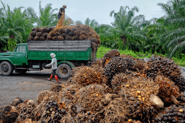 Policy bolsters Nigerias oil palm makers' revenue in third quarter -