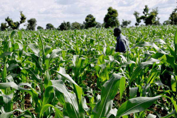 Lagos APPEALS empowers 1,600 agripreneurs with training -