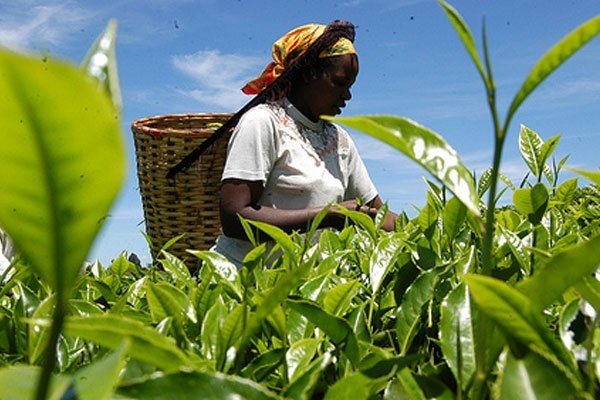 Time to disturb agricultures silent markets - Businessday NG
