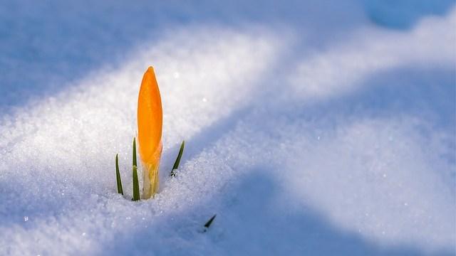 春は必ず訪れる。