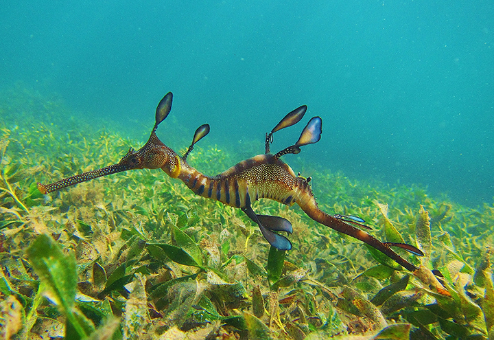 sea dragon exhibit dazzles