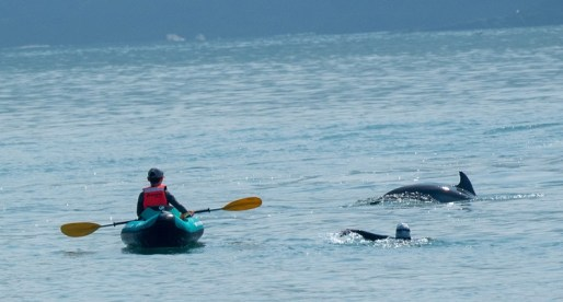 Public Urged to Enjoy Dolphin Sightings at a Distance