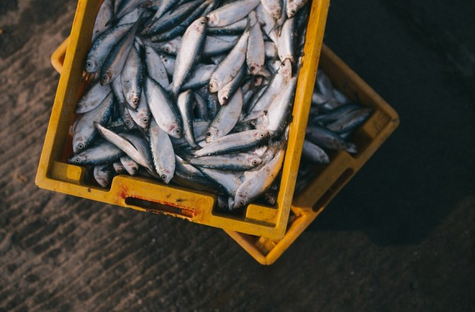 Welsh Seafood Cluster Encourages Enterprises to 'Dive In'