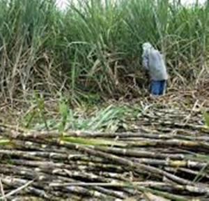 उखु किसानको ९२ करोड ३० लाख अनुदान कोलेनिकामै थन्कियो