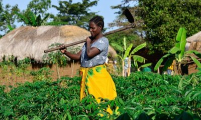 World Bank Okays $200m Agric Loan for Nigeria