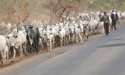 FAAN Begs Air Peace Over Cows on Akure Airport Runway