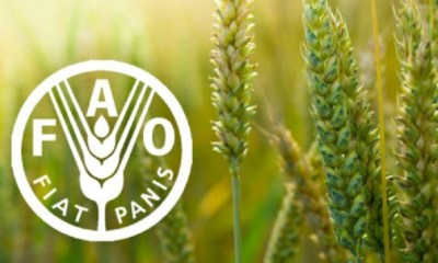 Food and Agricultural Organisation FAO