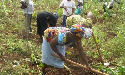 WACOT rice farmers