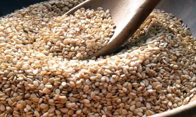 Sesame Export