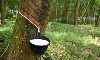 Investment in Rubber