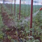 Pesticide Ban Could Reduce Food Production By 70PC – Stakeholders