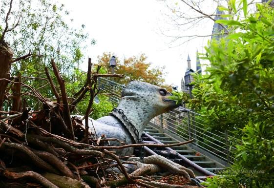 tips on visiting wizarding world of harry potter - buckbeak