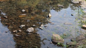 water pollution stats