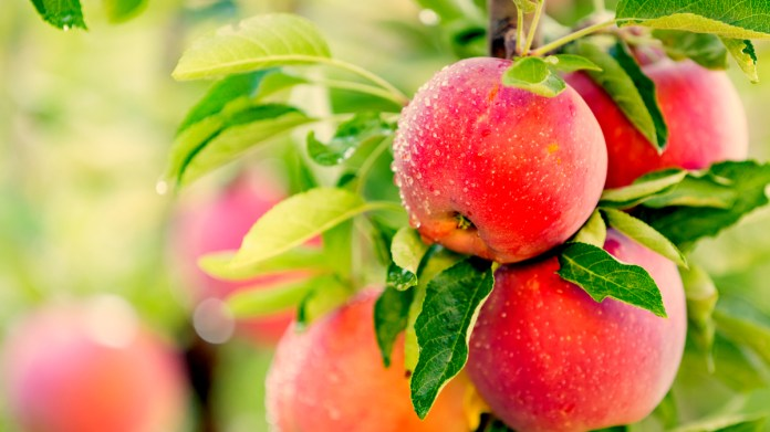 nutritional value of apple