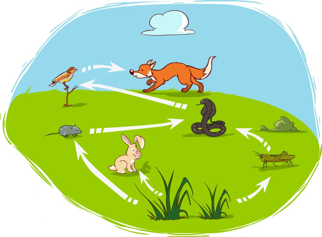 Ecosystem And Food Chain