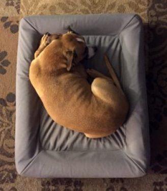 casperdogmattress_comfy