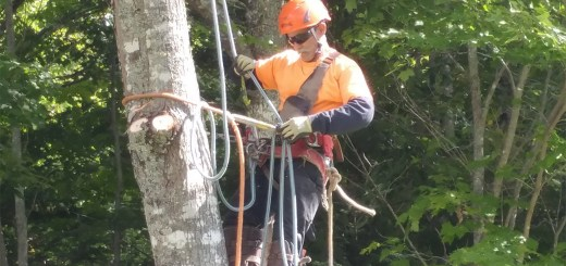 Busy Beavers Affordable Tree Service