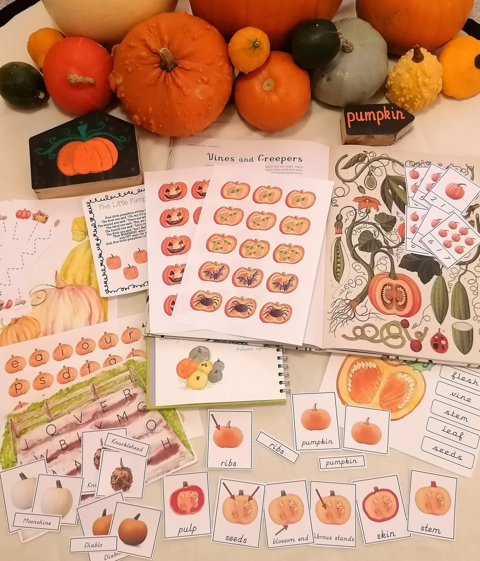 pumpkins - pumpkin week - enwc - exploring nature with children - nature play - learning through play - play matters - vines - creepers - nature journalling - recipes - craft ideas