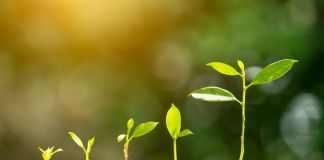 5 steps to growing your business revenue - Insight from HashChing