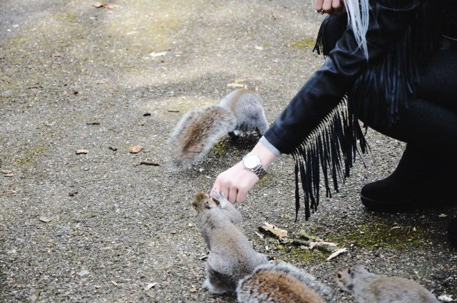 squirrels (4)