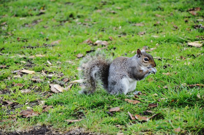 squirrels (7)