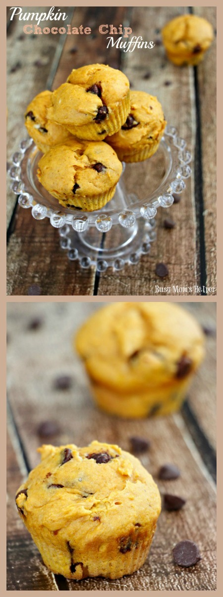 Pumpkin Chocolate Chip Muffins / by Busy Mom's Helper #muffins #pumpkin