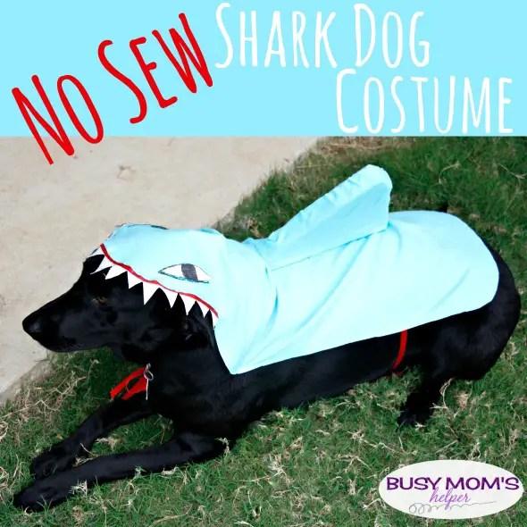 No Sew Clown Fish Dog Costume / by BusyMomsHelper.com