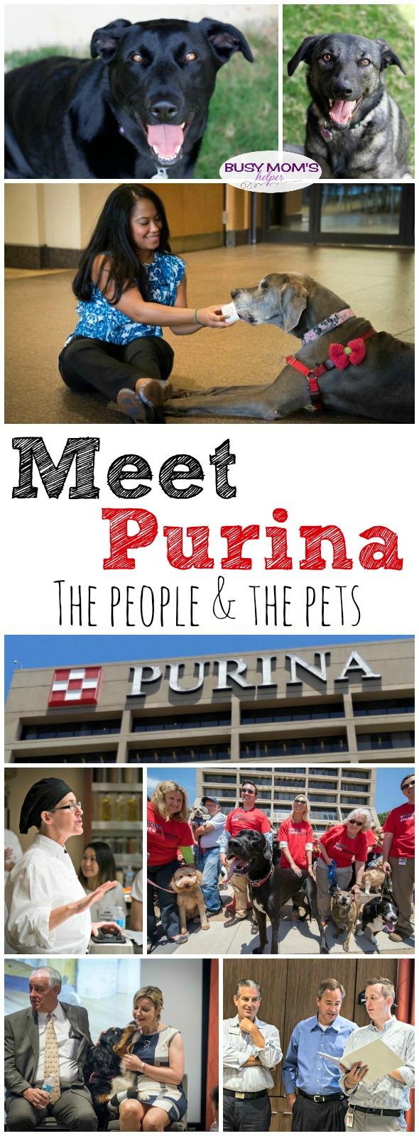 Meet the people behind Purina #MeetPurina #ad