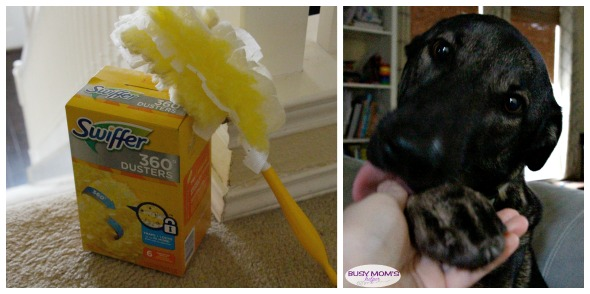 Pet Clean Up Made Easy #AD #DontSweatYourPet #SwifferFanatic