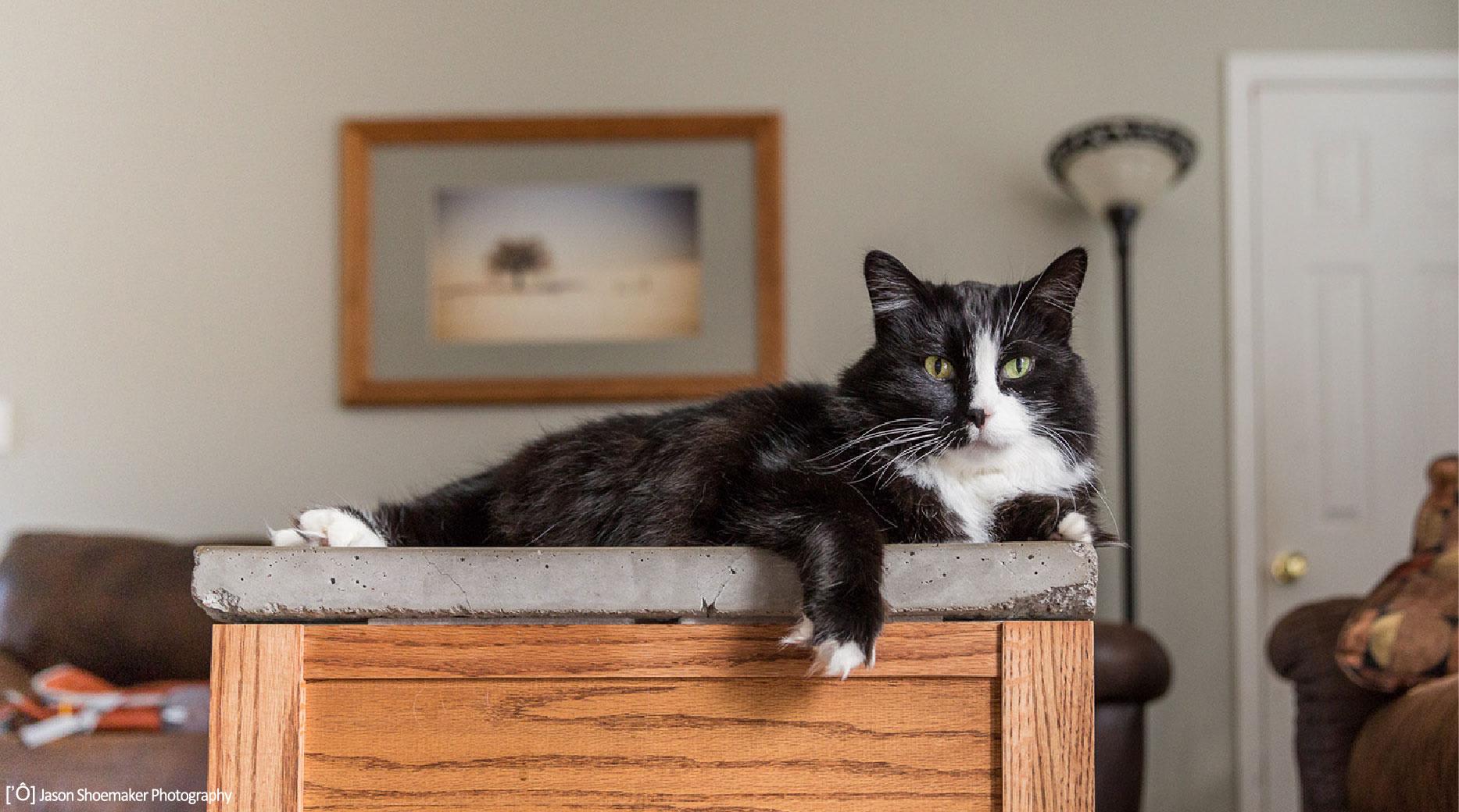 tuxedo cat kirby kansas city pet sitting cat sitting