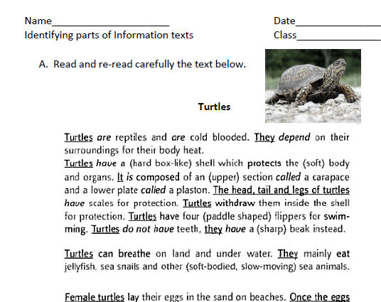 Turtles Identifying Parts Of Information Text