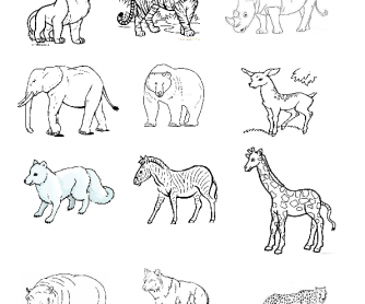 Colour the Biggest Animal First and Go On