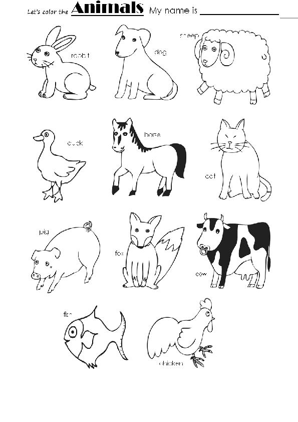 Animals Color