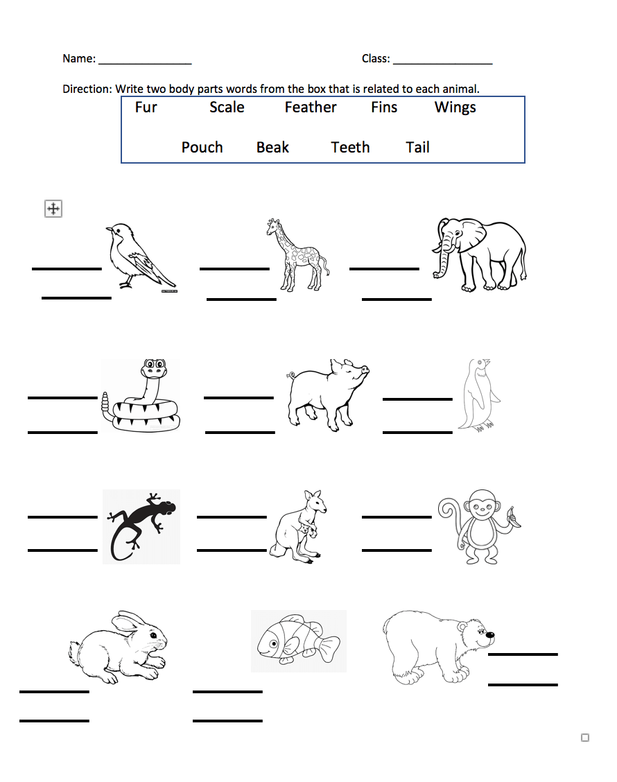medium resolution of 377 FREE Appearance/Body Parts Worksheets
