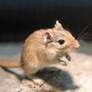ネズミ正方形