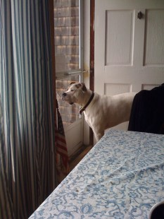 ::waiting for mom or dad to come home::
