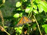 ::butterfly garden::