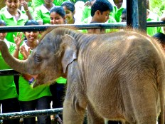 ::at least the Sri Lankan kiddies look happy::